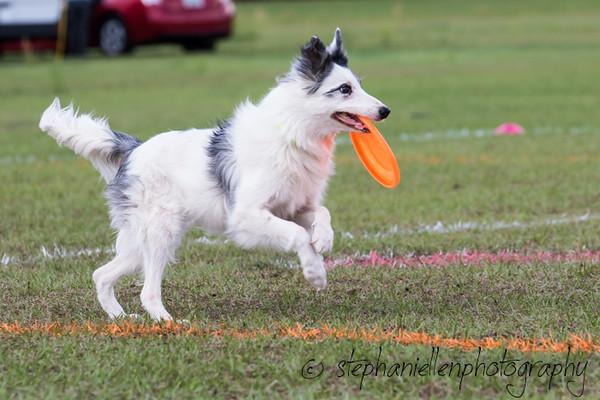 _MG_3026Up_dog_International_2016_StephaniellenPhotography.jpg