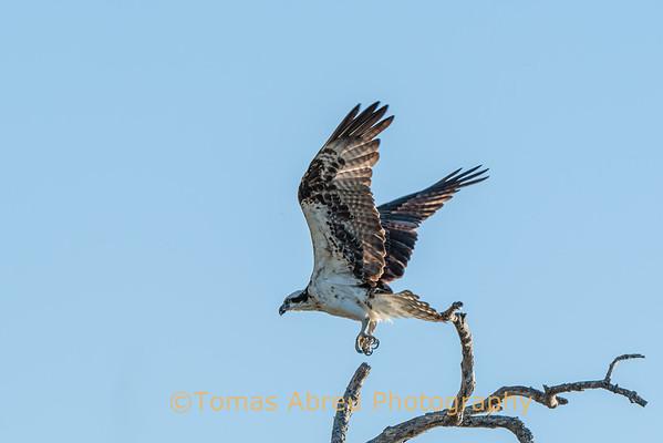 Everglades National Park 3
