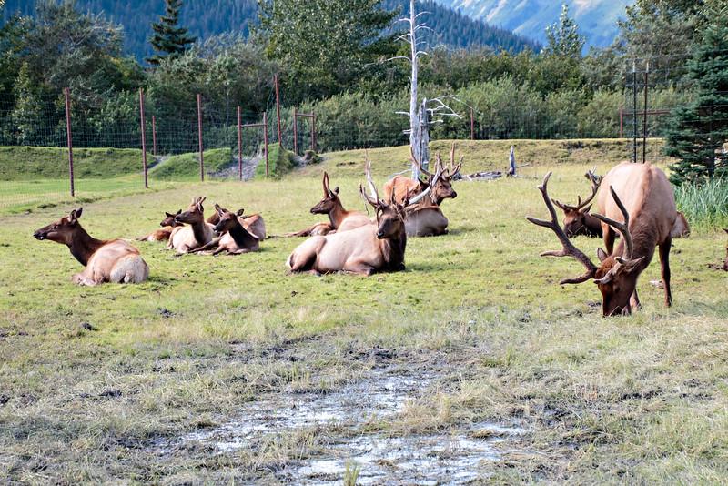 2014 08 18_Alaska_0627_edited-1.jpg