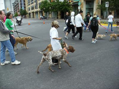 DOG WALK 2009