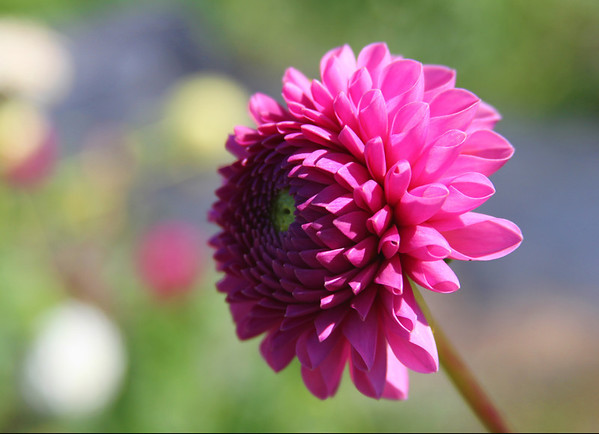 Fall Flowers 11