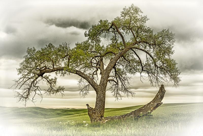 110.Derek Ford.2.JW Baylor Tree.jpg