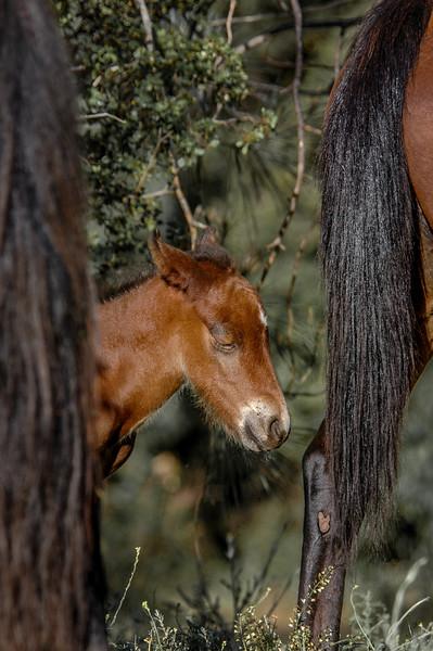 Wild Horse Foal Eyes Closed