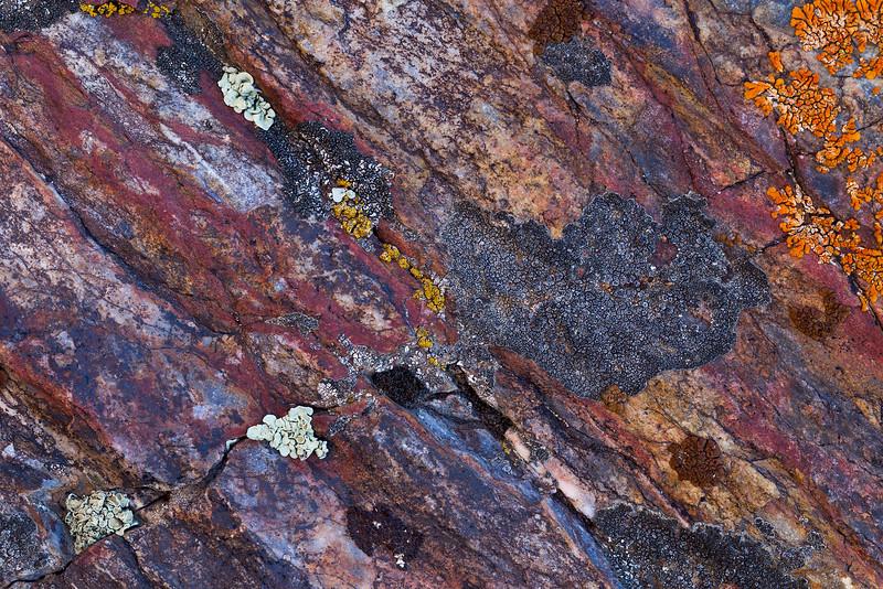 Lichen Cracks
