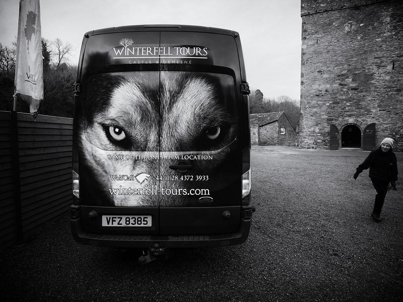 strang_direwolf_eyes.jpg