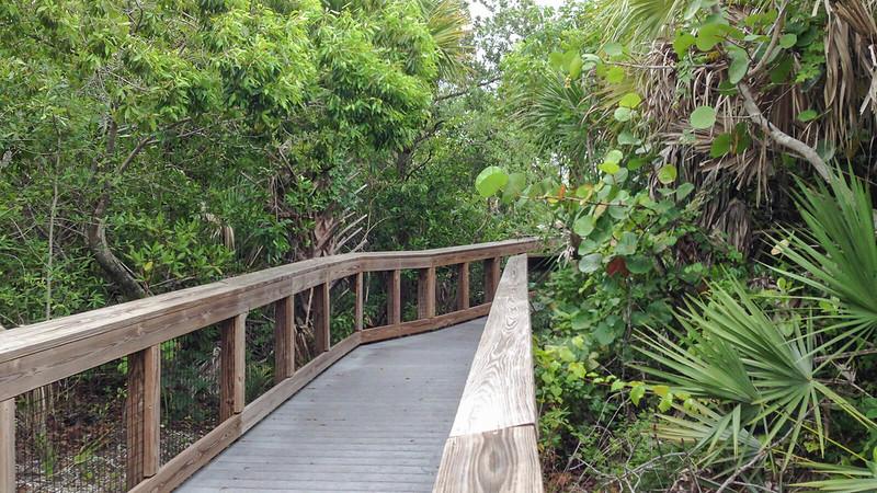 Boardwalk through dense vegetation