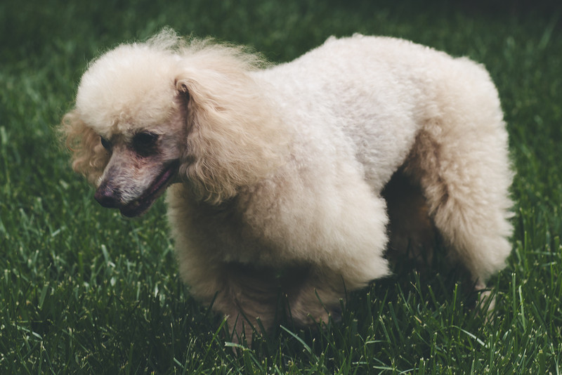 opal mike dogs (1 of 1)-110.jpg