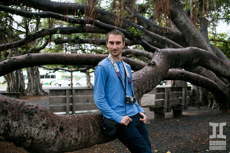 Martin tree 02.jpg