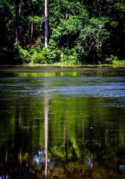 Huntsville State Forest-4177.jpg
