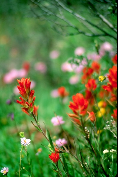 amh FLOWERS (1112).jpg