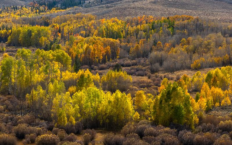 Conway Summit, Eastern Sierra, CA