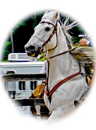 CMS Horses 50