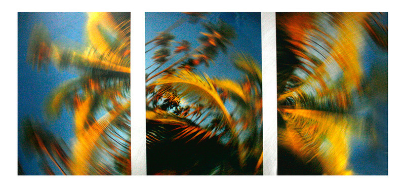 Windy Palms  (Burnished Metal with Transparency fused to Metal)
