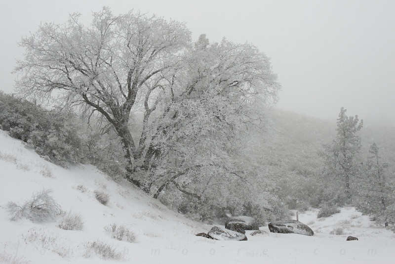 Falling snow in the Laguna Mountains