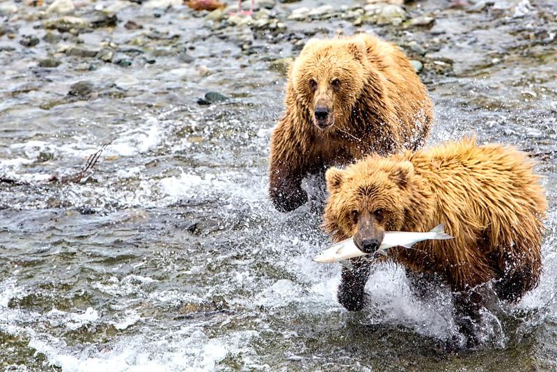 Alaska_2013_FH0T5186.jpg