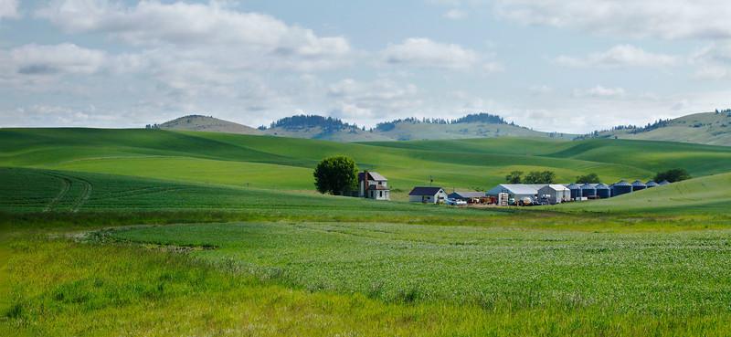 Wheatfarm with mountains, Washington state.