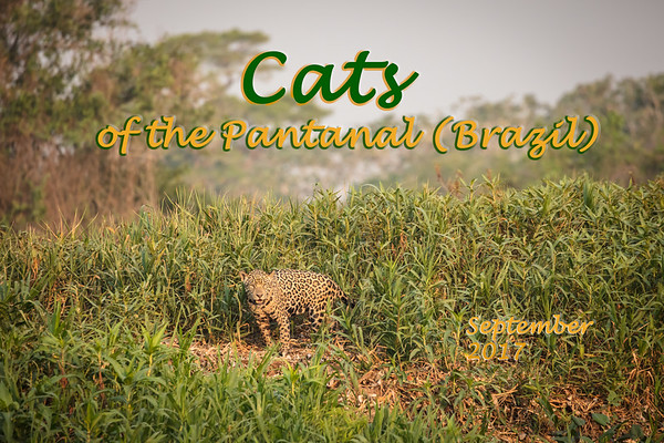 Cats of the Pantanal 2017