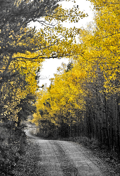 Peaceful Forest Road