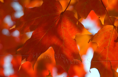 Autumn Photos for Videography