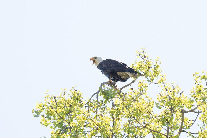 Eagle Bird-5.JPG