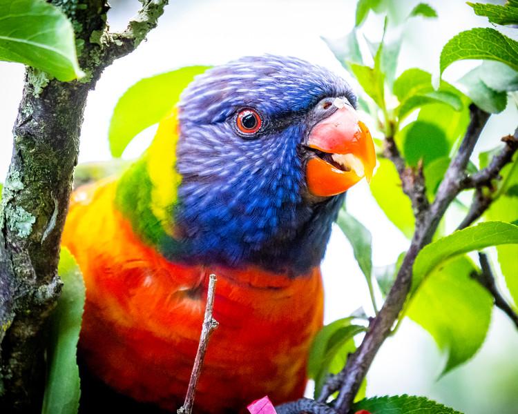 121818  birds  _9.JPG