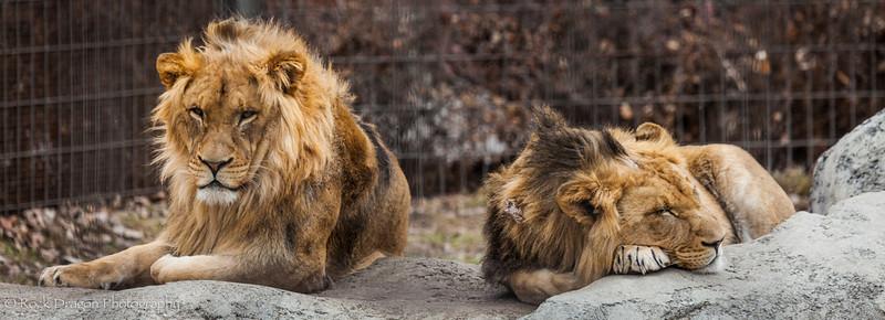 zoo_Apr_2013-10.jpg