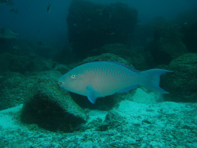 Diving in the Galapagos (160 of 392)