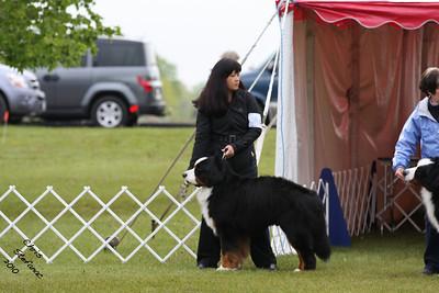 Amateur Owner Handler Dog BMDCA 2010
