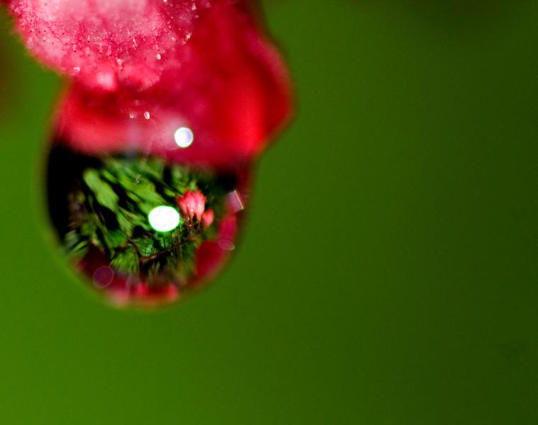 flowerdrop0651.jpg