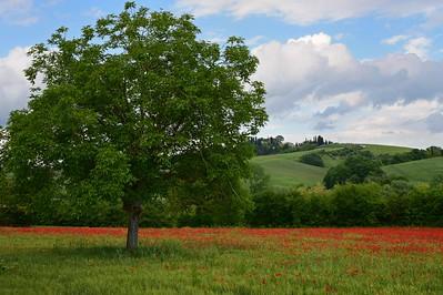 Italy 2016 Tuscany