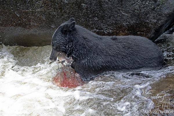 Anan Creek-Black Bears