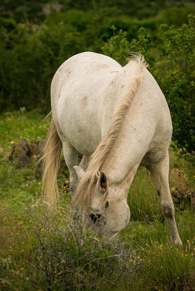 White horse TR_DWL9914.jpg