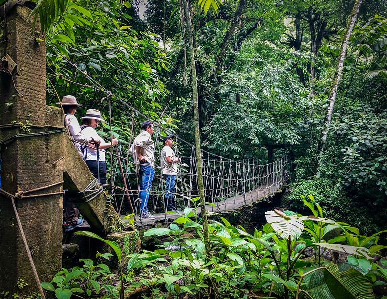Tourists stand on a swinging bridge above the Panamanian jungle.