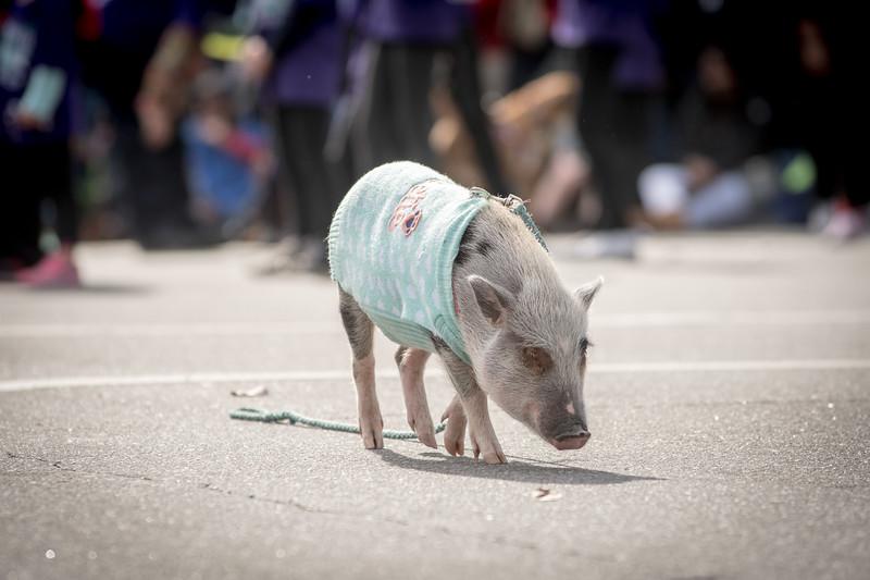 2017 Asheville Holiday Parade-138.jpg
