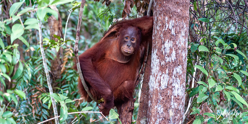 2012.10.07_Borneo_DSC_7439-Edit-Juno Kim.jpg