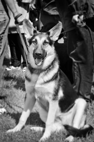 2011 Bark in the Park-161.jpg