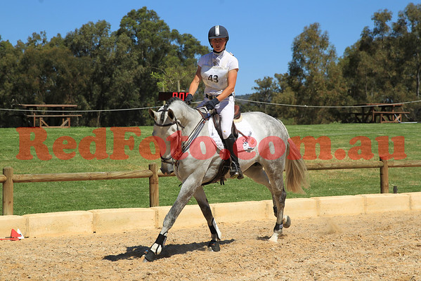 2012 10 21 Young Event Horse Red