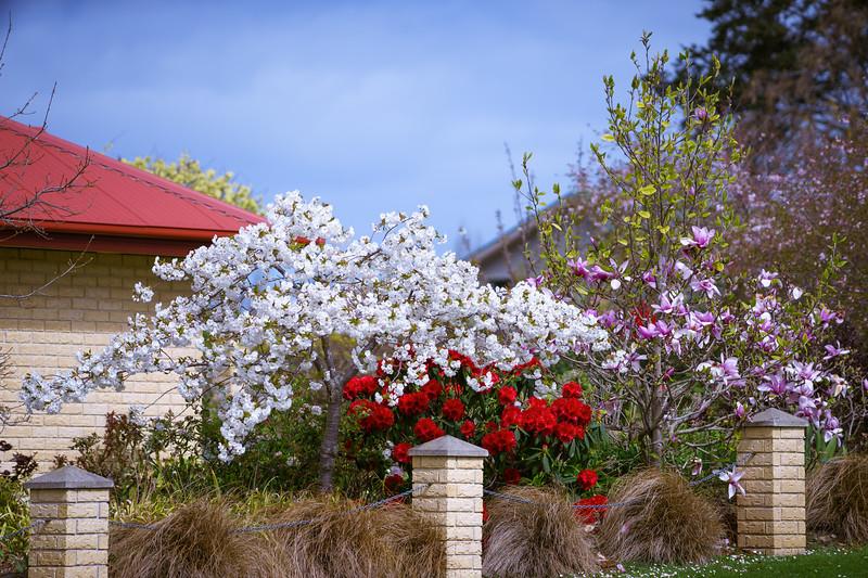 Blossom Tree280914-499.jpg