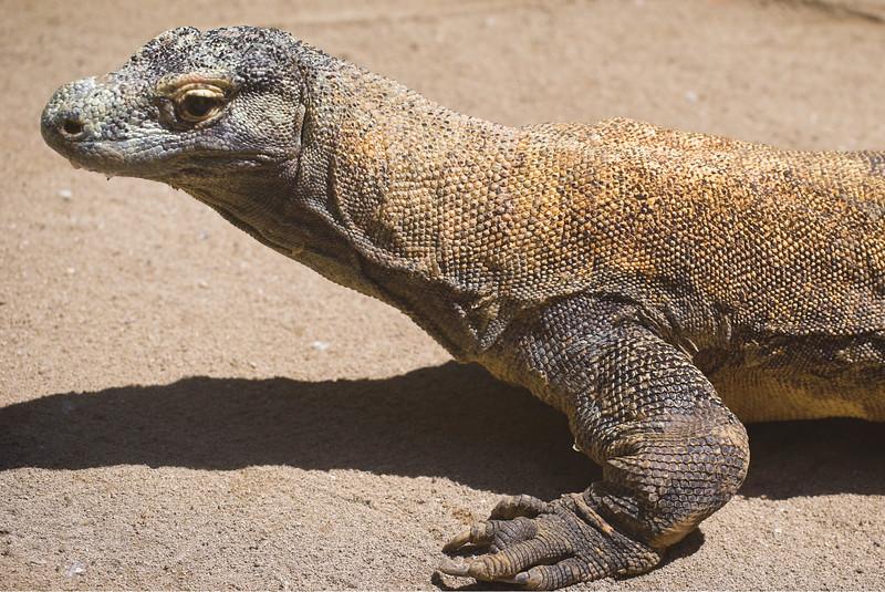 Komodo Dragon, Ubud