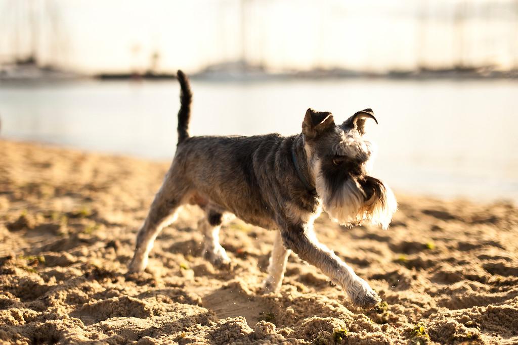 Dogsonbeach-AlexanderGardner-0021-20100614