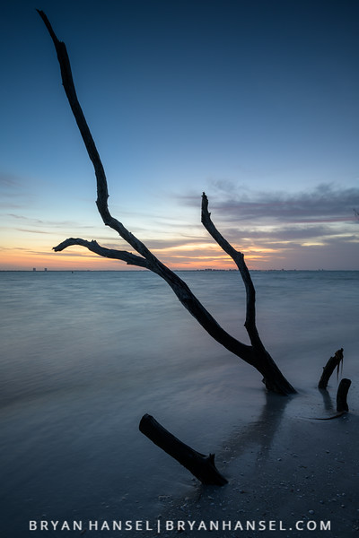 Sanibel Driftwood 8