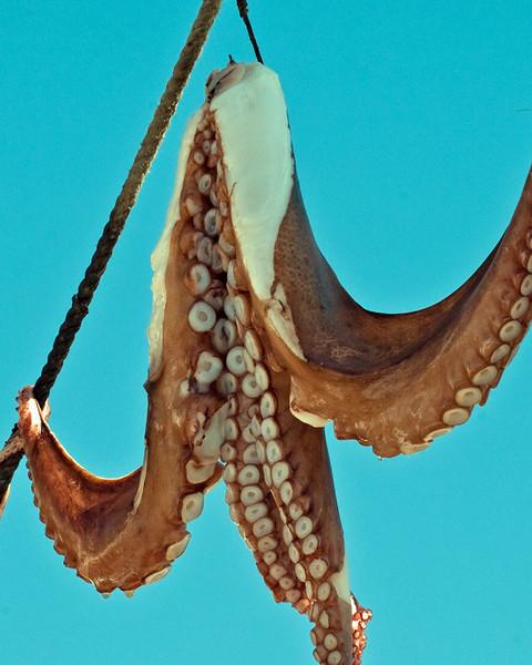Octopus drying
