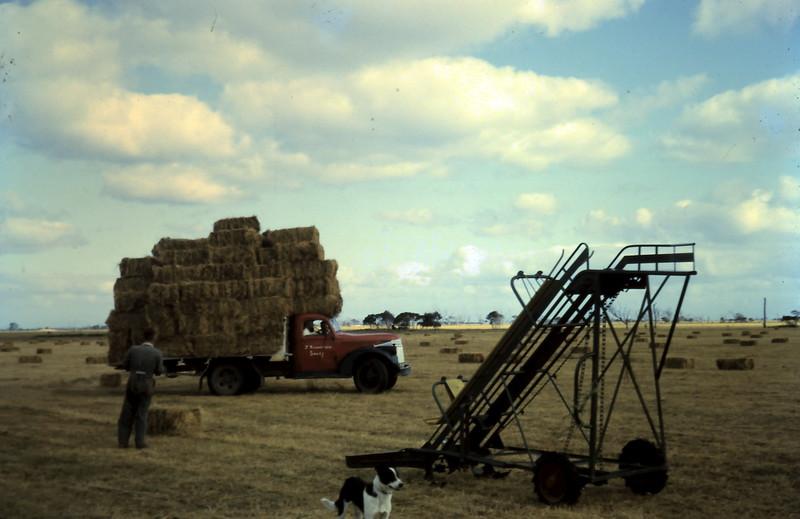 1964-12-6 (18) Loading hay.JPG