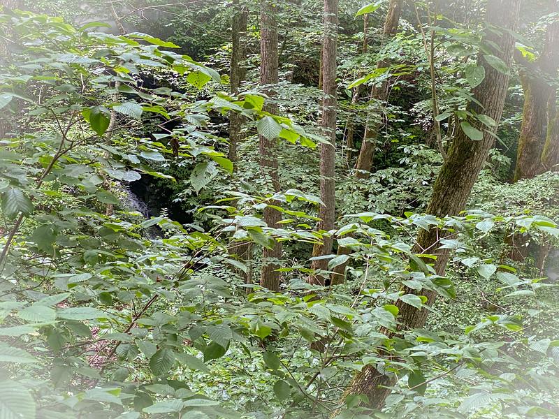 Lower Abs Creek Falls