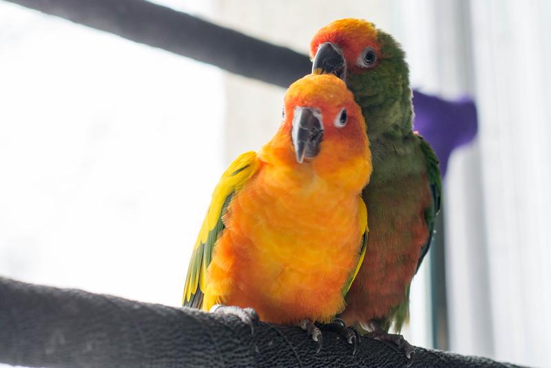 untitledbirds easterApr-17.jpg