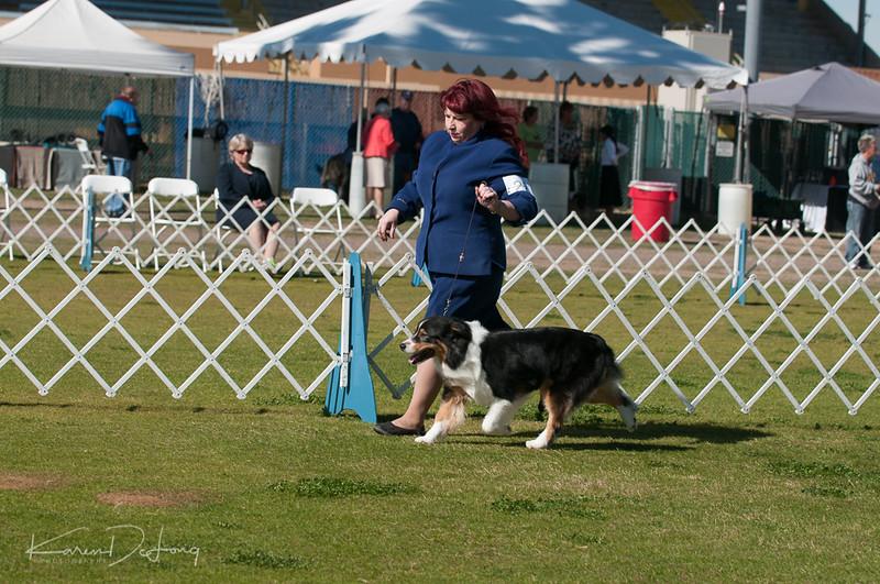 20170205_Australian Shepherds_Lost Dutchman Kennel Club-95.jpg