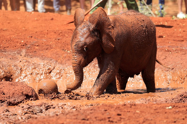 Sheldrick Elephants Nairobi Kenya 2017