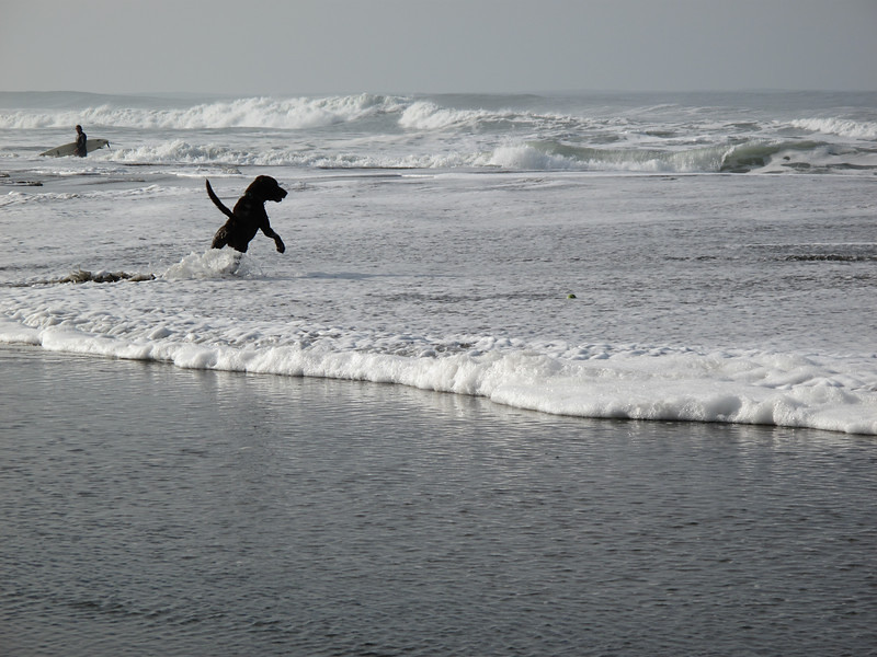 Dog & Surfer, Ocean Beach, San Francisco, November 2008
