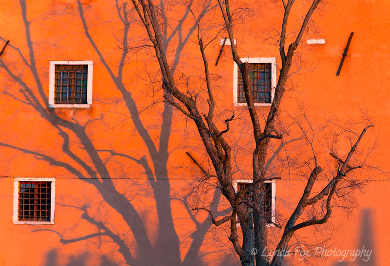 Wall of Windows in Orange Sunset
