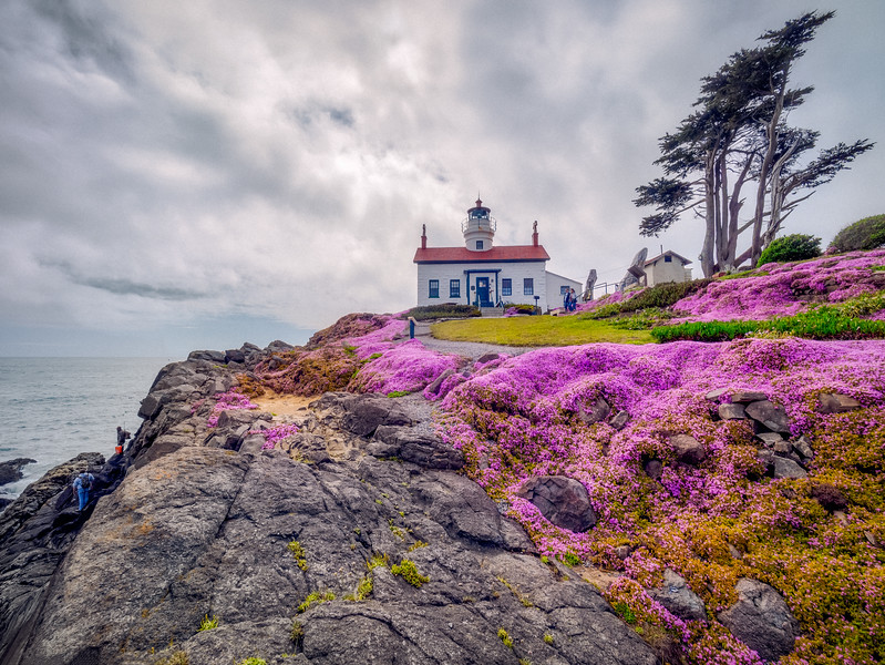 Pink Iceplant Battery Point Lighthouse